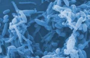 biofilm-enzyme-nettoyage-300x195
