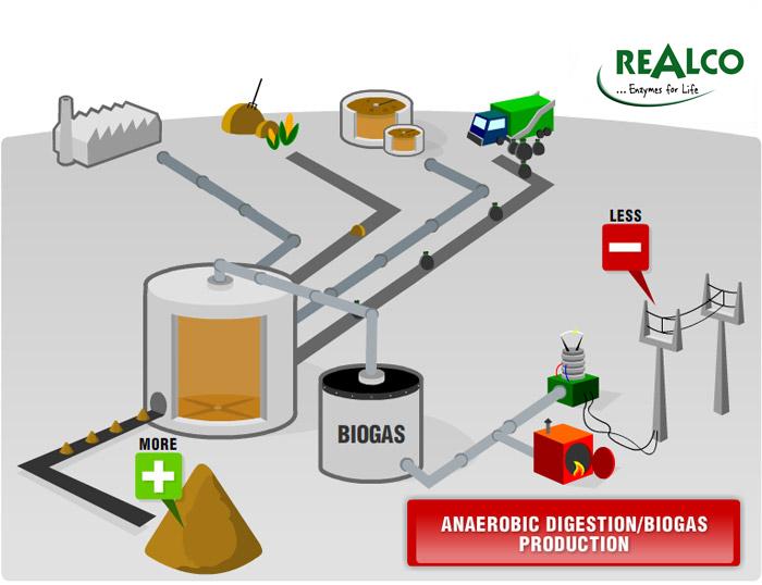 biomethanization enzyme energy biofuel