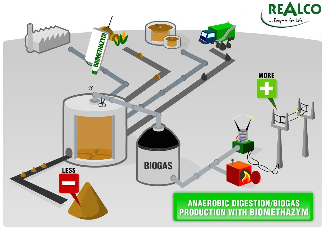 substrate biomethanization enzyme energy biofuel